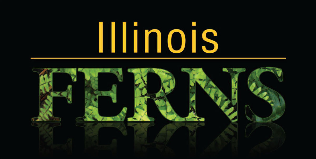 Illinois Ferns Banner