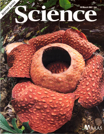 Rafflesia Science cover